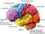 brain_color